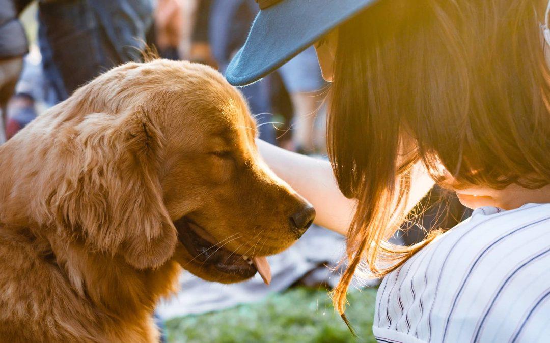 Tratamiento y prevención de ladirofilariosis canina