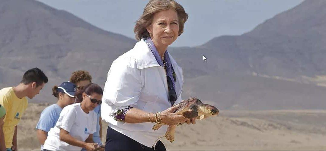 La Reina Sofía participa junto a Aragó HV en la suelta de tortuga marina rescatada en Mallorca