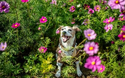 perro entre las flores de un arbusto