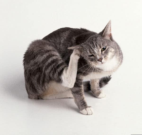La desparasitación de nuestras mascotas