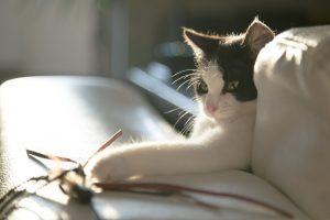 cat-716559_1920