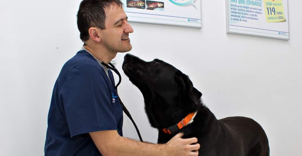 hospital para perros en mallorca