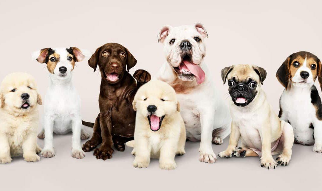 La salud de nuestras mascotas no puede esperar