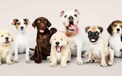 Veterinaria para perros