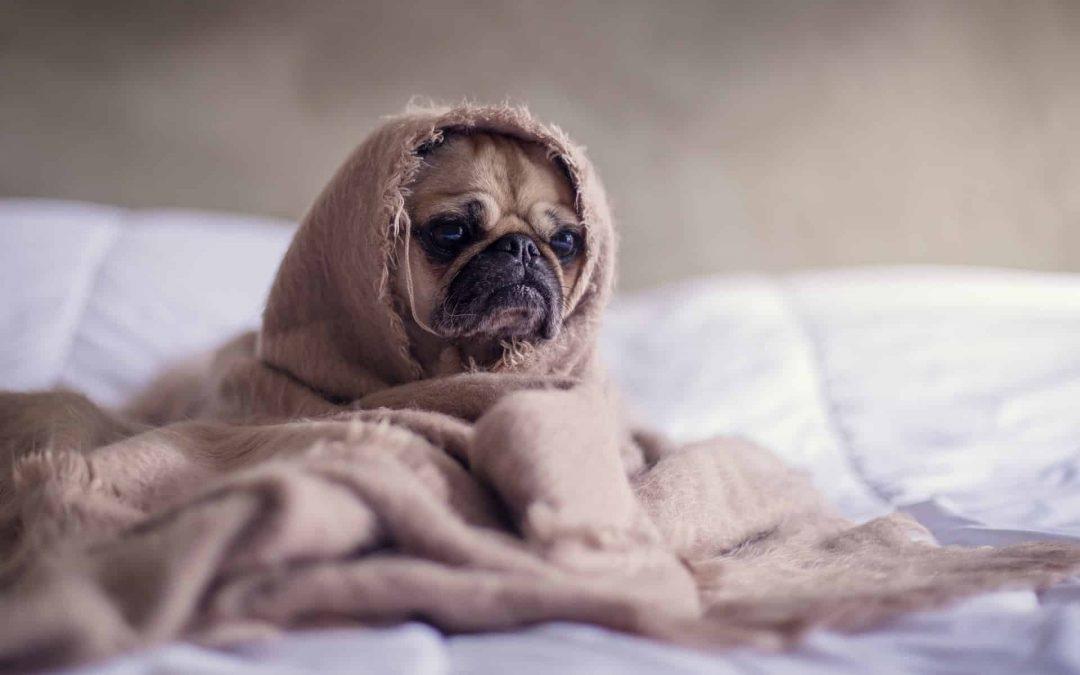 Recomendaciones sobre el Coronavirus y tu mascota