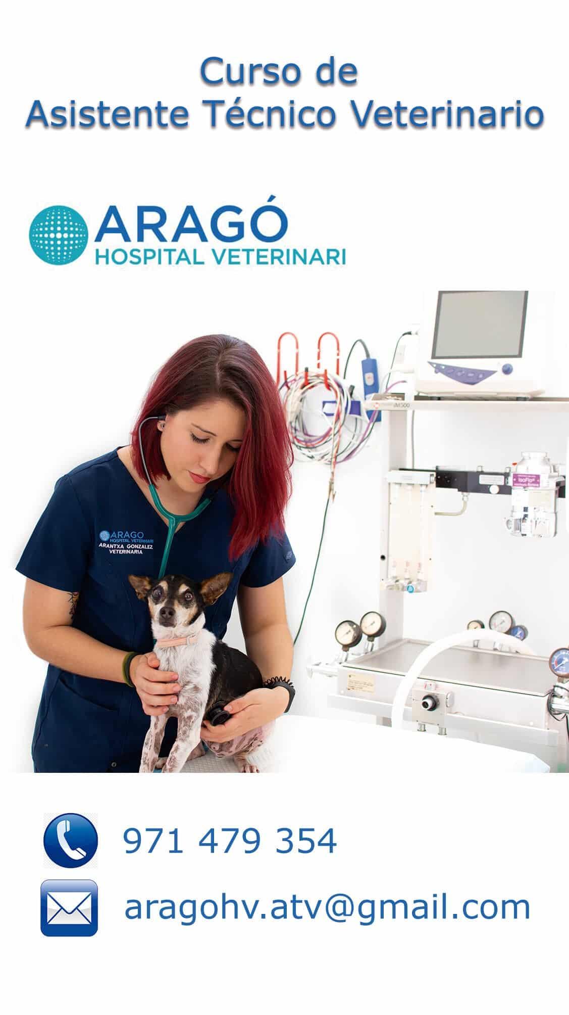 folleto promocional veterinario