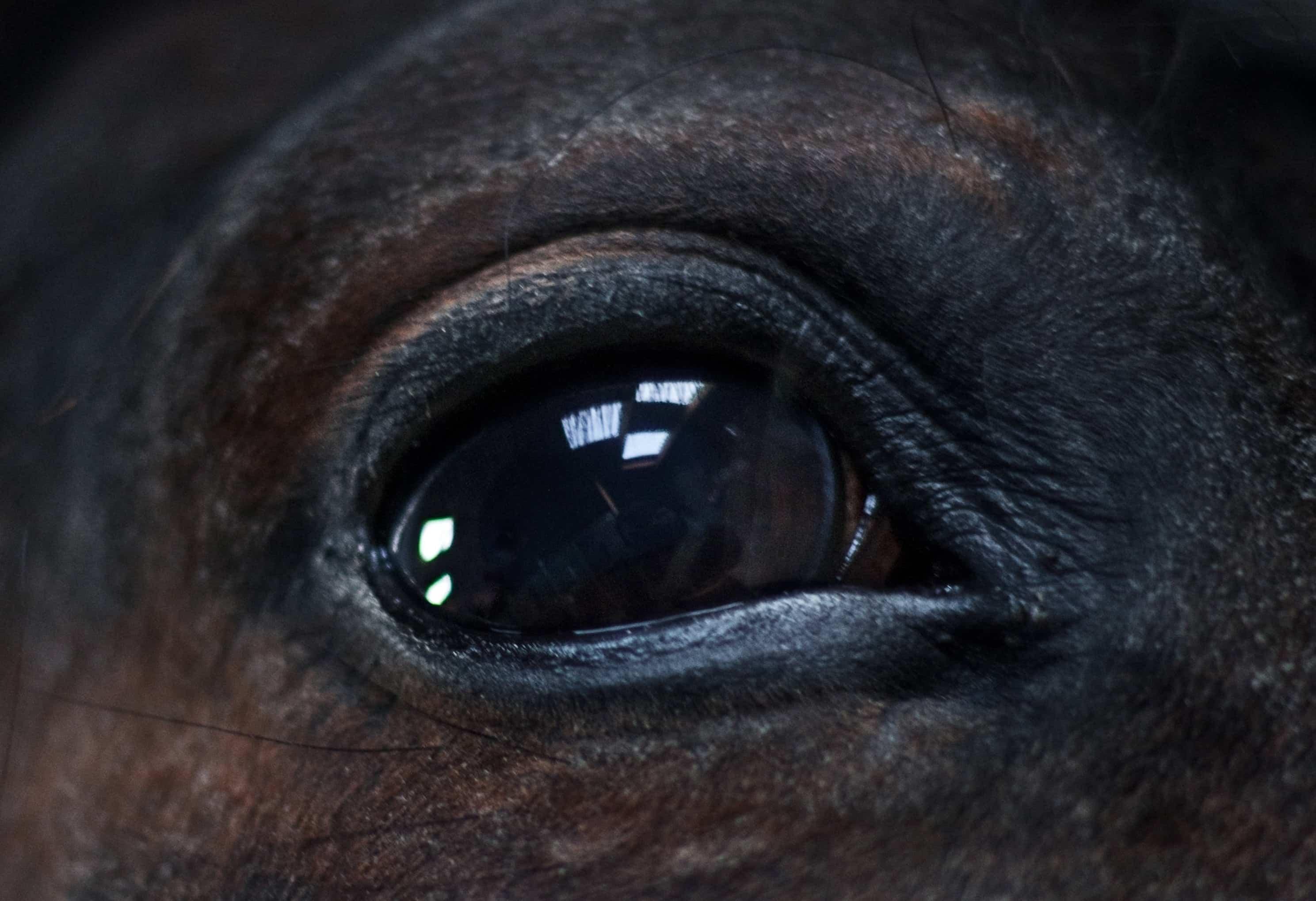 oftalmologia mascotas