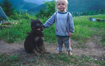 perro en acampada con un niño