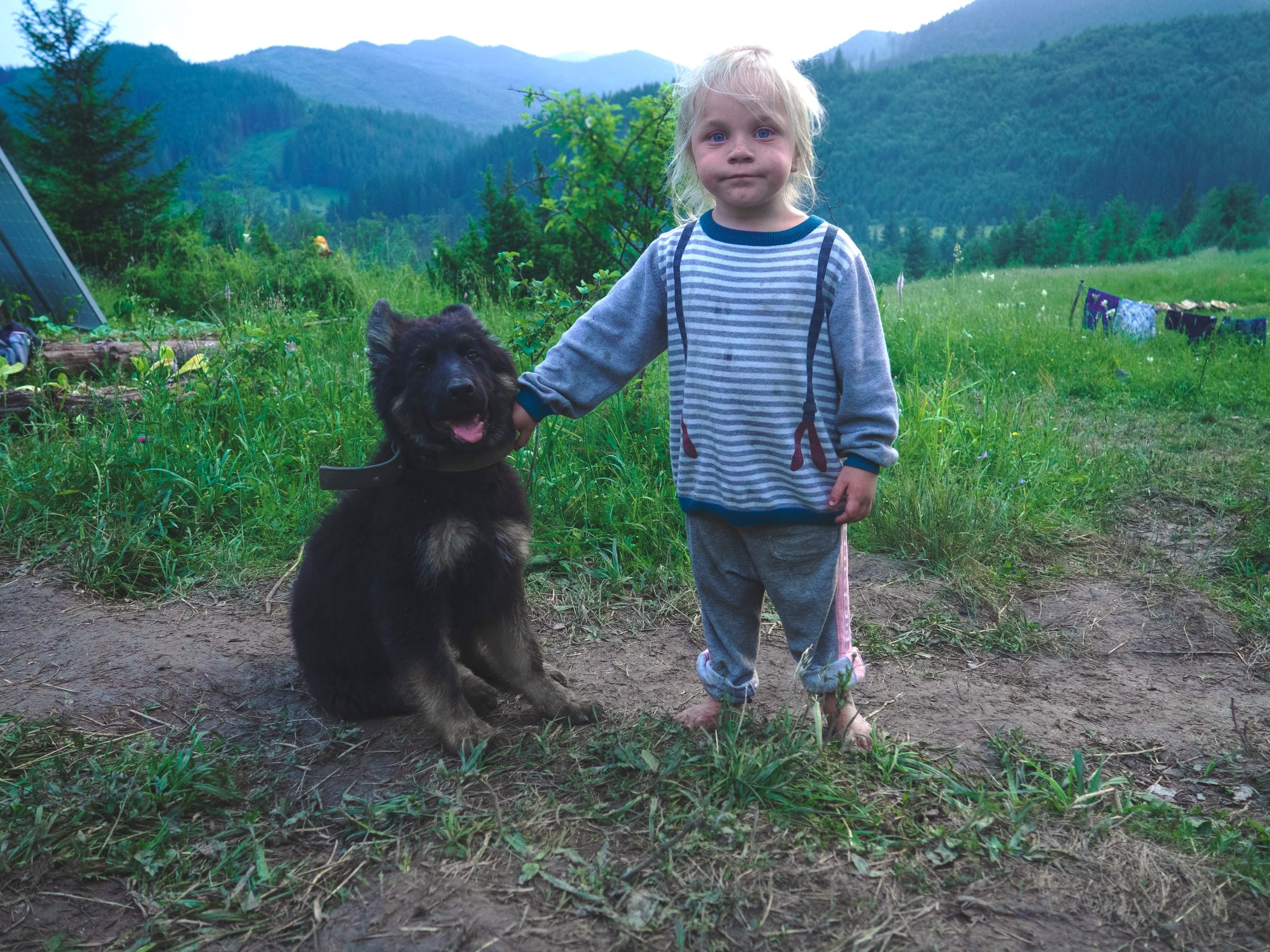 Las vacaciones para nuestras mascotas