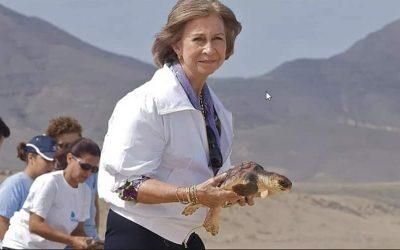 Reina Sofía rescatando tortugas en peligro