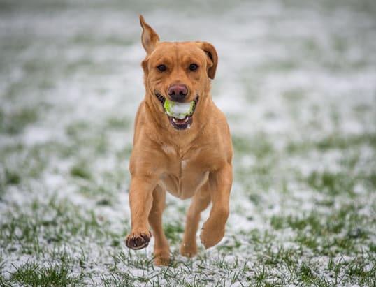 perro corriendo tras tratamiento de fisioterapia